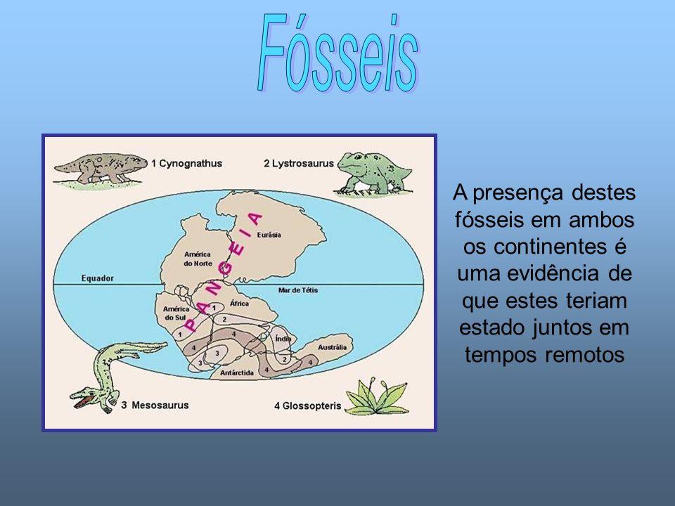 Fósseis A presença destes fósseis em ambos os continentes é uma evidência de que estes teriam estado juntos em tempos remotos.
