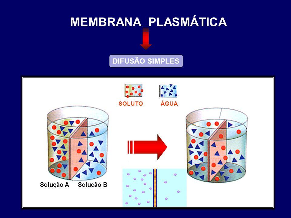 MEMBRANA PLASMÁTICA DIFUSÃO SIMPLES ÁGUA SOLUTO Solução A Solução B