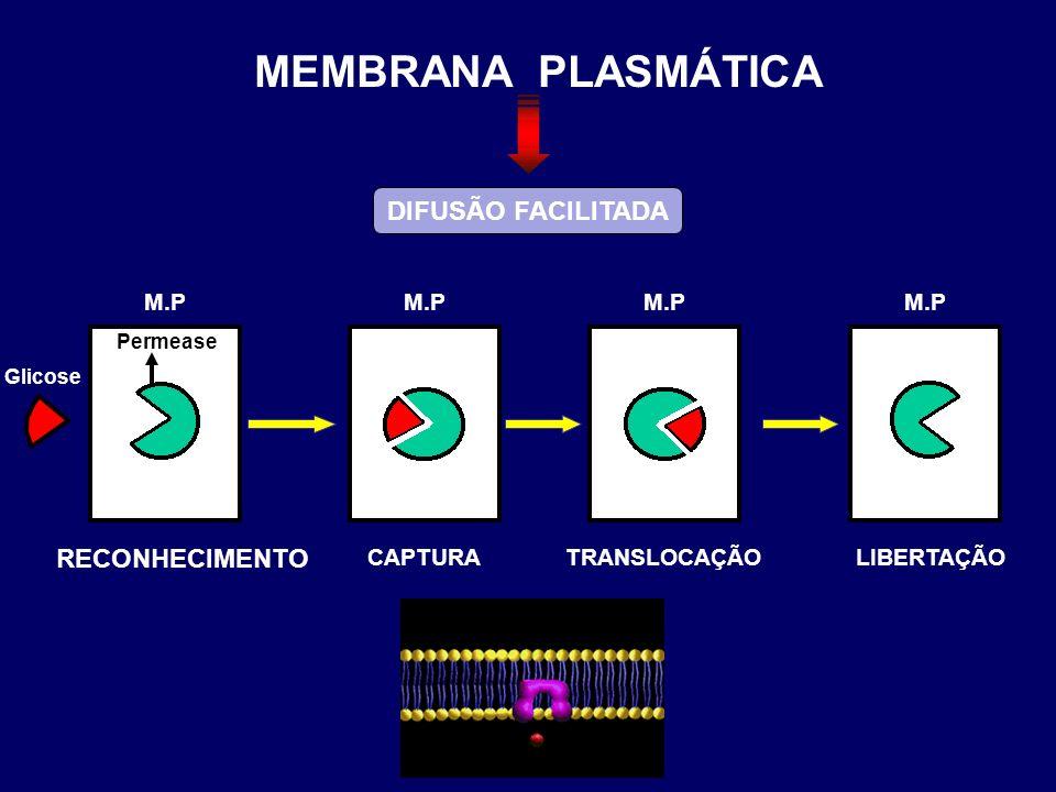 MEMBRANA PLASMÁTICA DIFUSÃO FACILITADA RECONHECIMENTO M.P CAPTURA M.P
