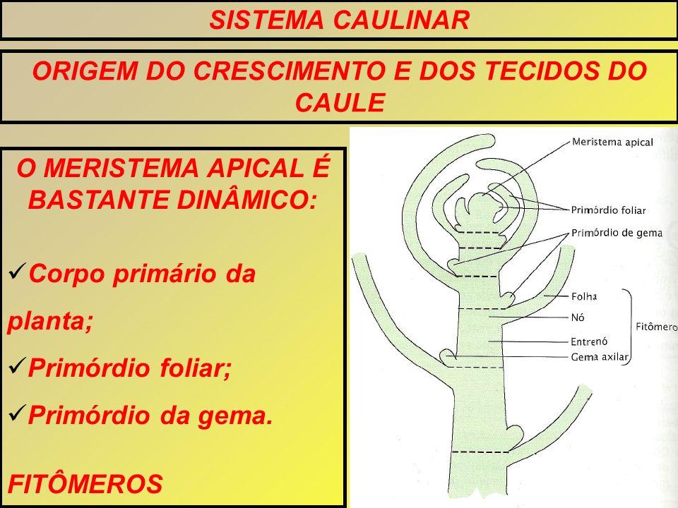 ORIGEM DO CRESCIMENTO E DOS TECIDOS DO CAULE