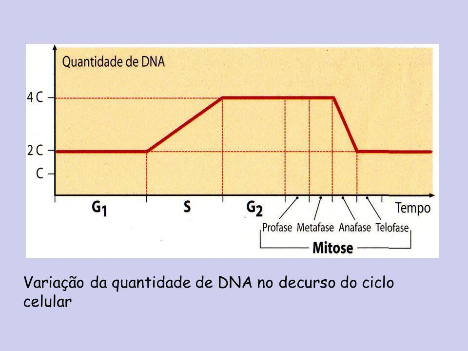 Variação da quantidade de DNA no decurso do ciclo celular
