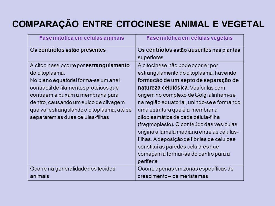 COMPARAÇÃO ENTRE CITOCINESE ANIMAL E VEGETAL