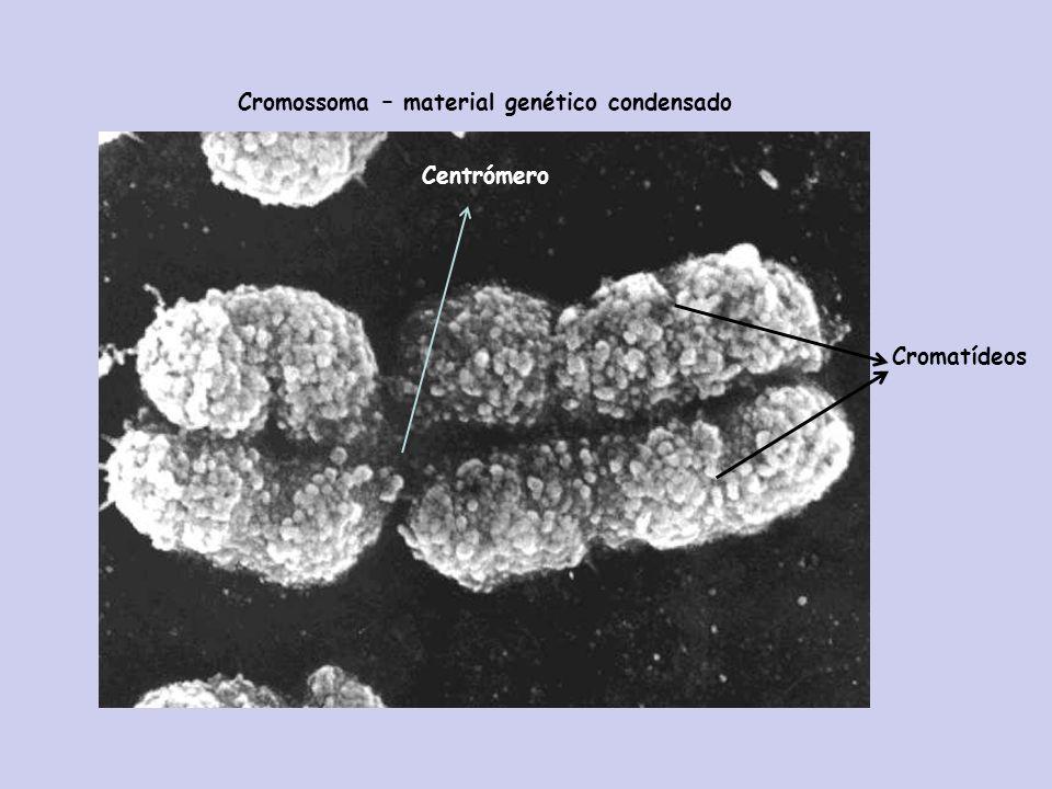 Cromossoma – material genético condensado