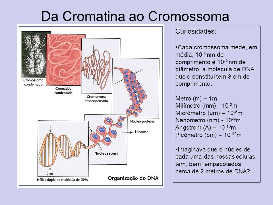 Da Cromatina ao Cromossoma