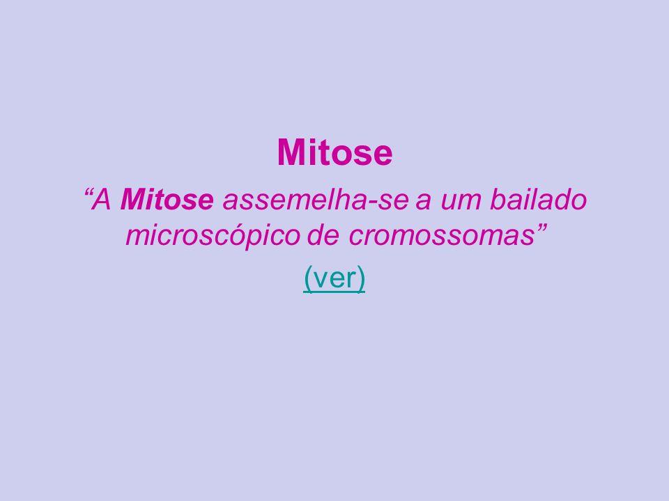 A Mitose assemelha-se a um bailado microscópico de cromossomas