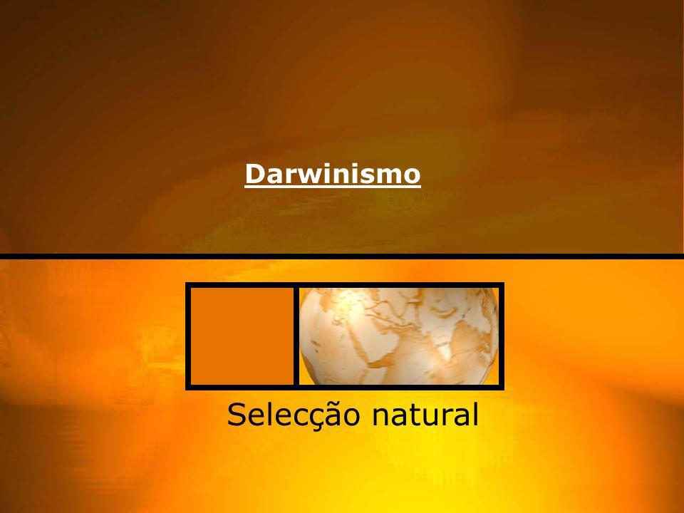Darwinismo Selecção natural