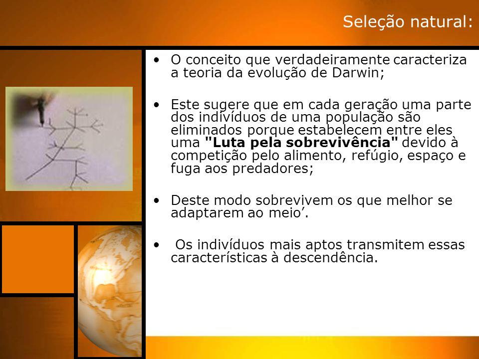 Seleção natural: O conceito que verdadeiramente caracteriza a teoria da evolução de Darwin;