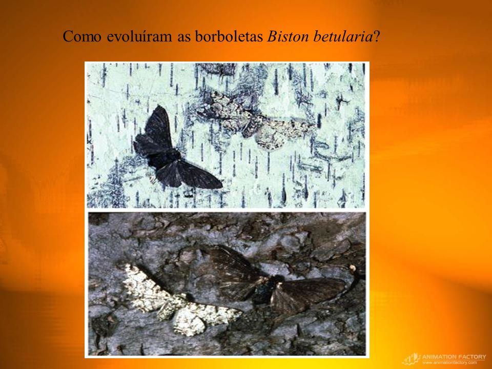 Como evoluíram as borboletas Biston betularia