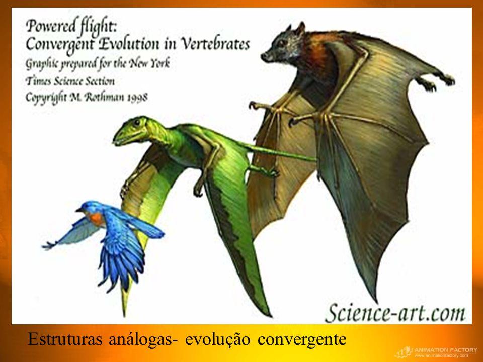 Estruturas análogas- evolução convergente