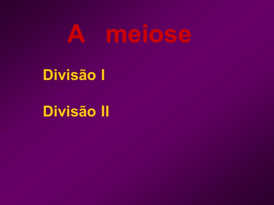 A meiose Divisão I Divisão II