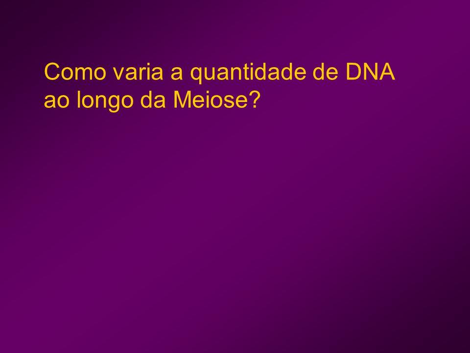 Como varia a quantidade de DNA ao longo da Meiose