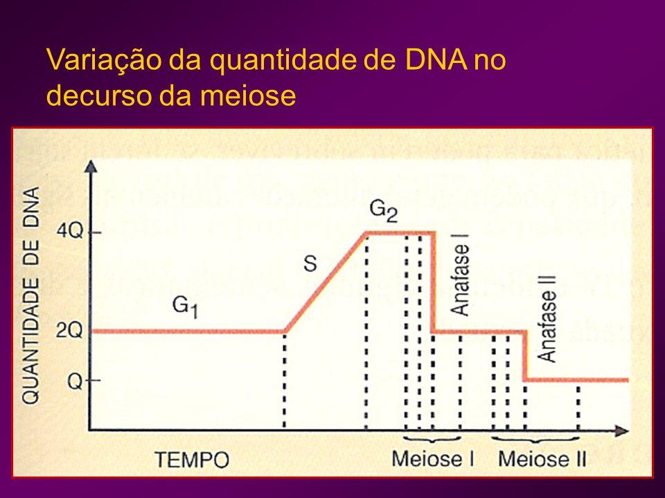 Variação da quantidade de DNA no decurso da meiose