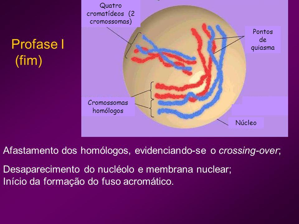 Cromossomas homólogos