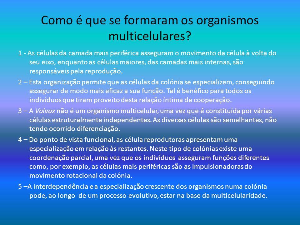 Como é que se formaram os organismos multicelulares