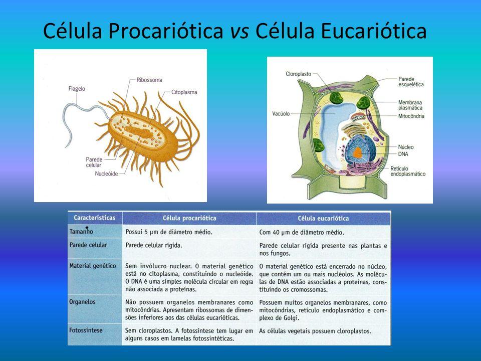 Célula Procariótica vs Célula Eucariótica