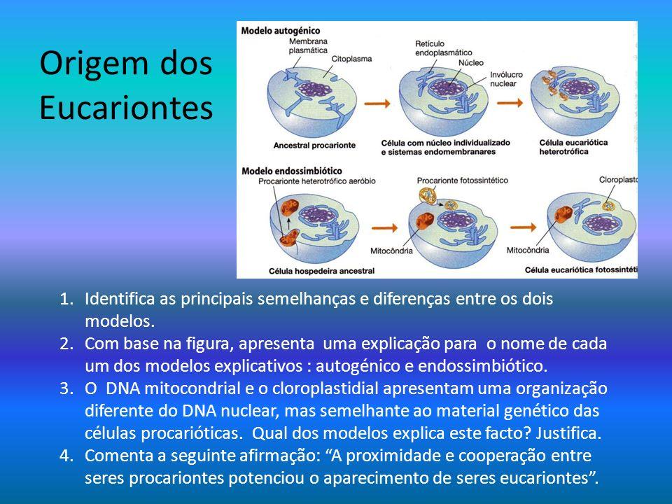Origem dos Eucariontes