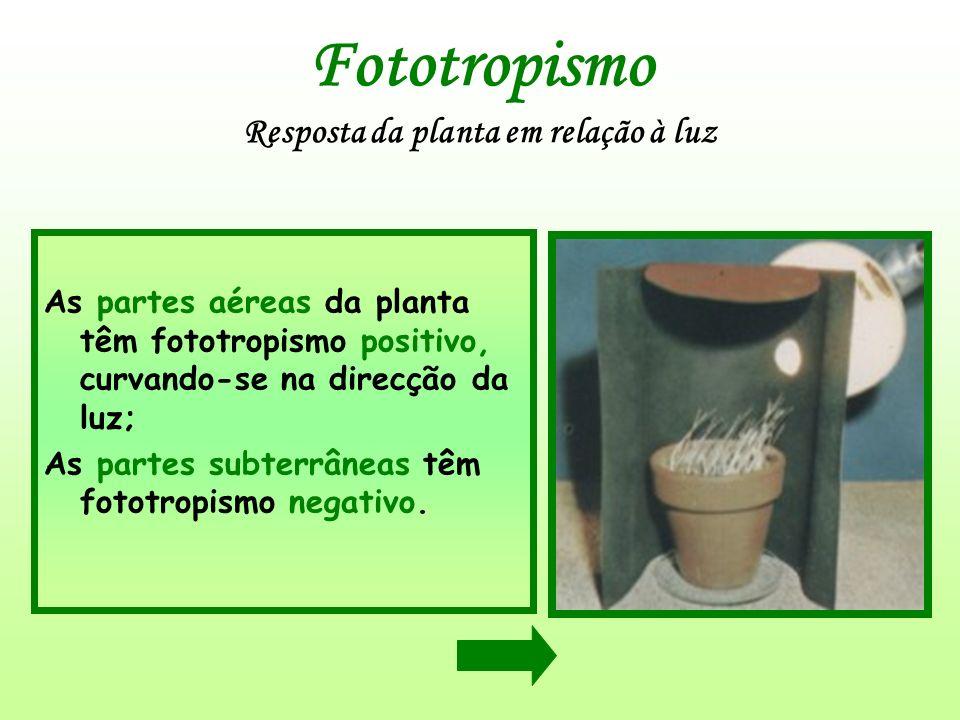 Fototropismo Resposta da planta em relação à luz