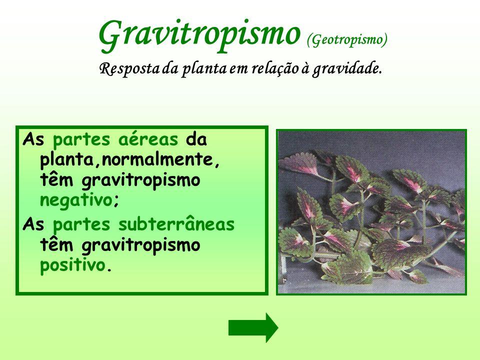 Gravitropismo (Geotropismo) Resposta da planta em relação à gravidade.