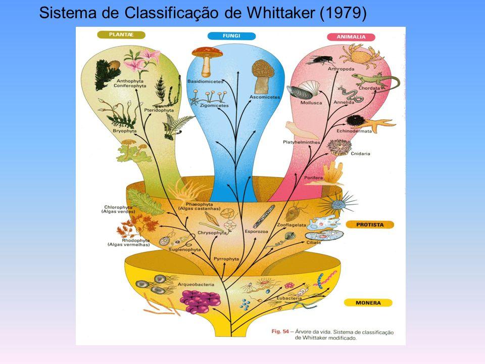 Sistema de Classificação de Whittaker (1979)