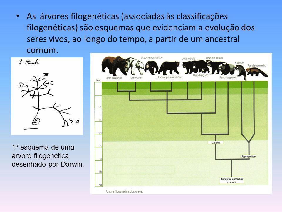As árvores filogenéticas (associadas às classificações filogenéticas) são esquemas que evidenciam a evolução dos seres vivos, ao longo do tempo, a partir de um ancestral comum.