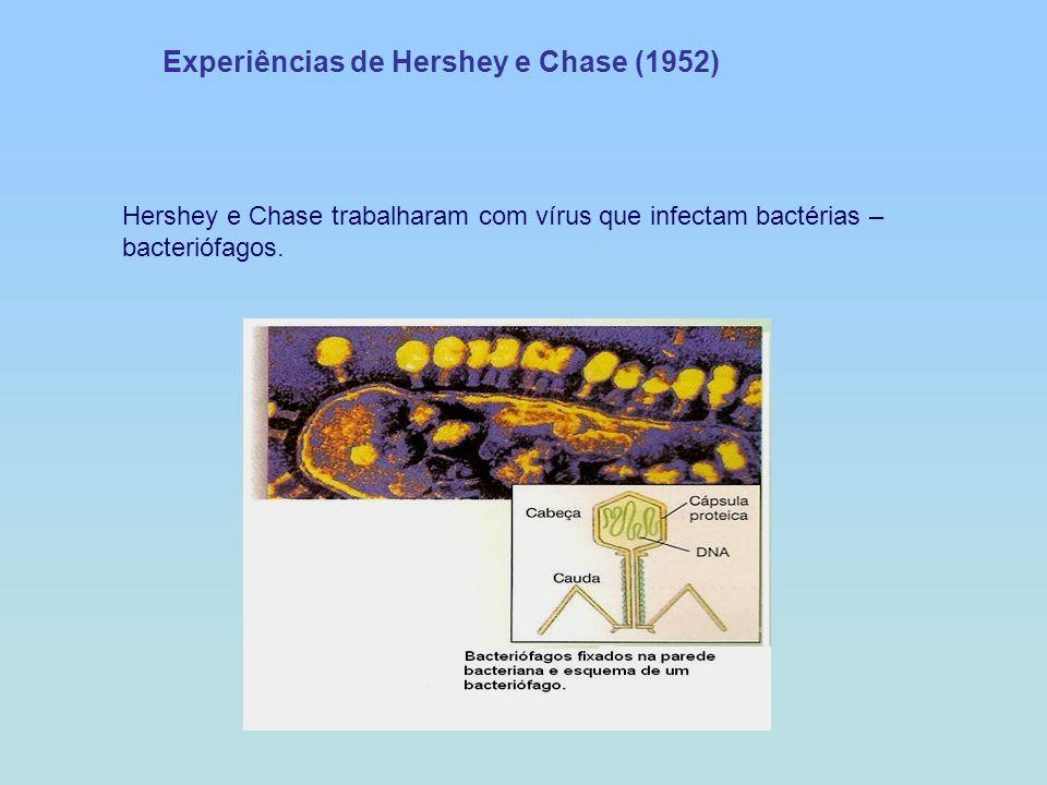 Experiências de Hershey e Chase (1952)