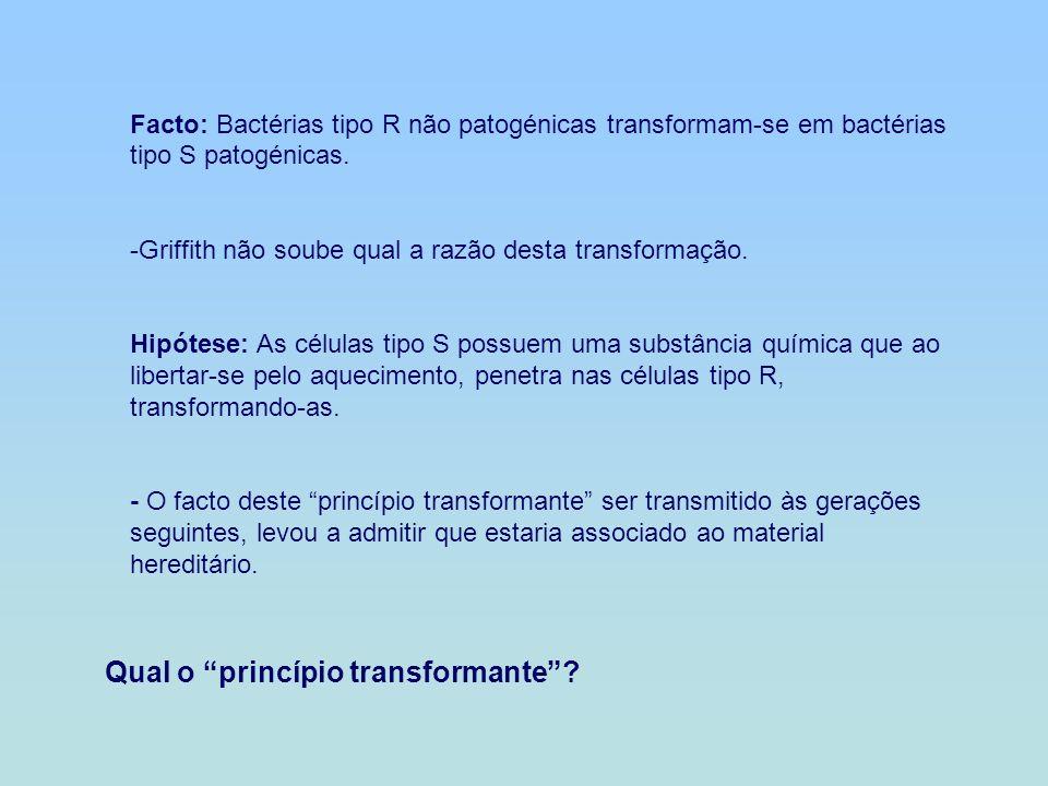 Qual o princípio transformante