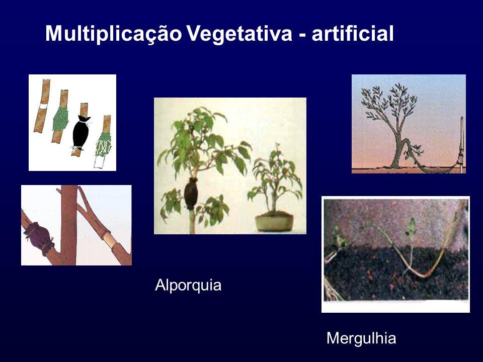 Multiplicação Vegetativa - artificial