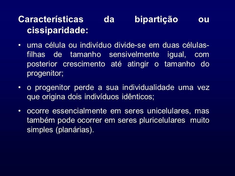 Características da bipartição ou cissiparidade: