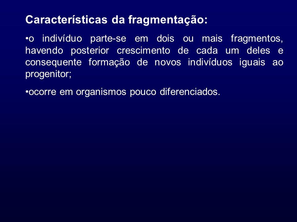Características da fragmentação: