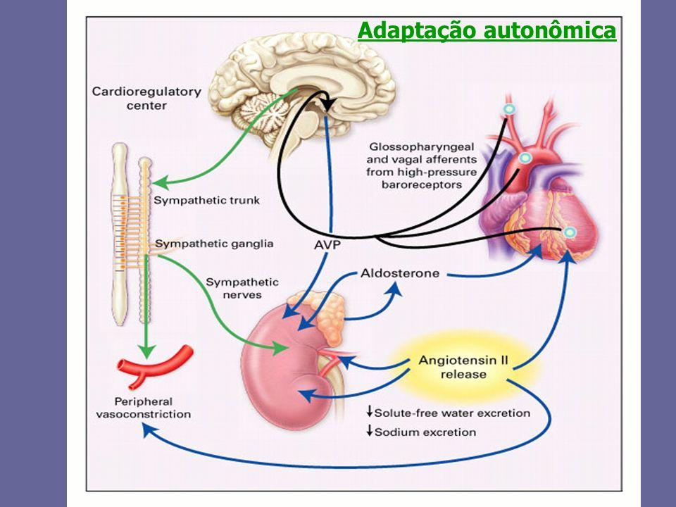 Adaptação autonômica