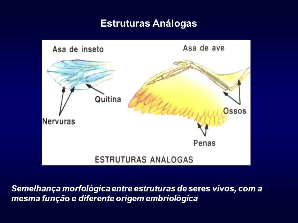 Estruturas Análogas Semelhança morfológica entre estruturas de seres vivos, com a mesma função e diferente origem embriológica.