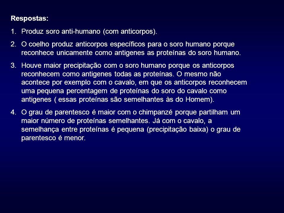 Respostas: Produz soro anti-humano (com anticorpos).