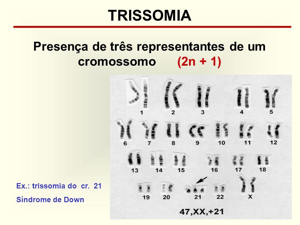 Presença de três representantes de um cromossomo (2n + 1)