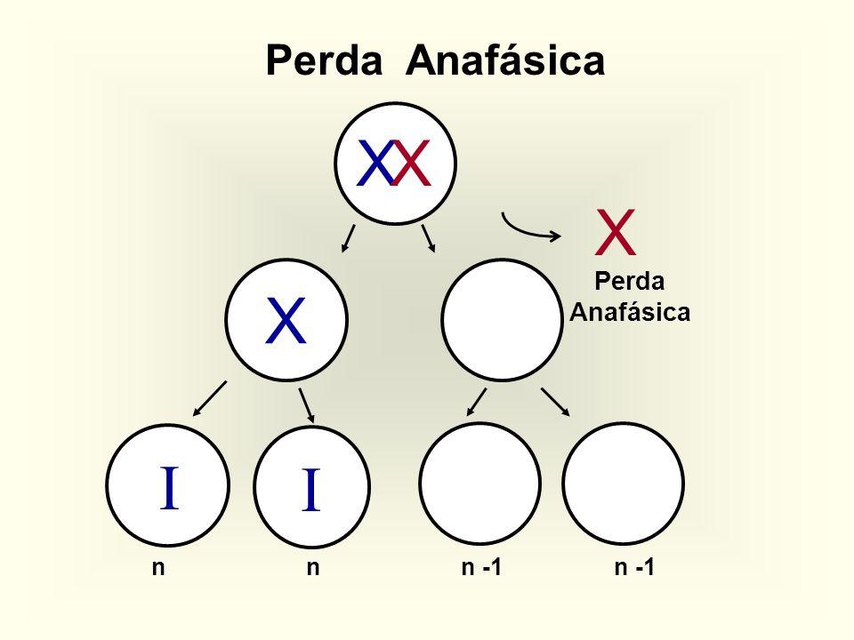 Perda Anafásica X X X Perda Anafásica X I I n n n -1 n -1