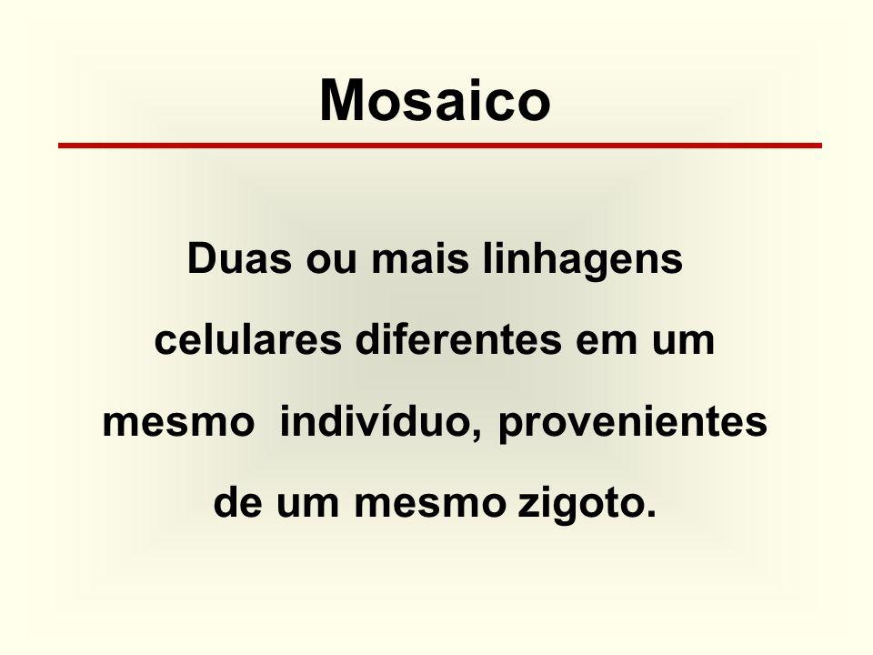 Mosaico Duas ou mais linhagens celulares diferentes em um mesmo indivíduo, provenientes de um mesmo zigoto.