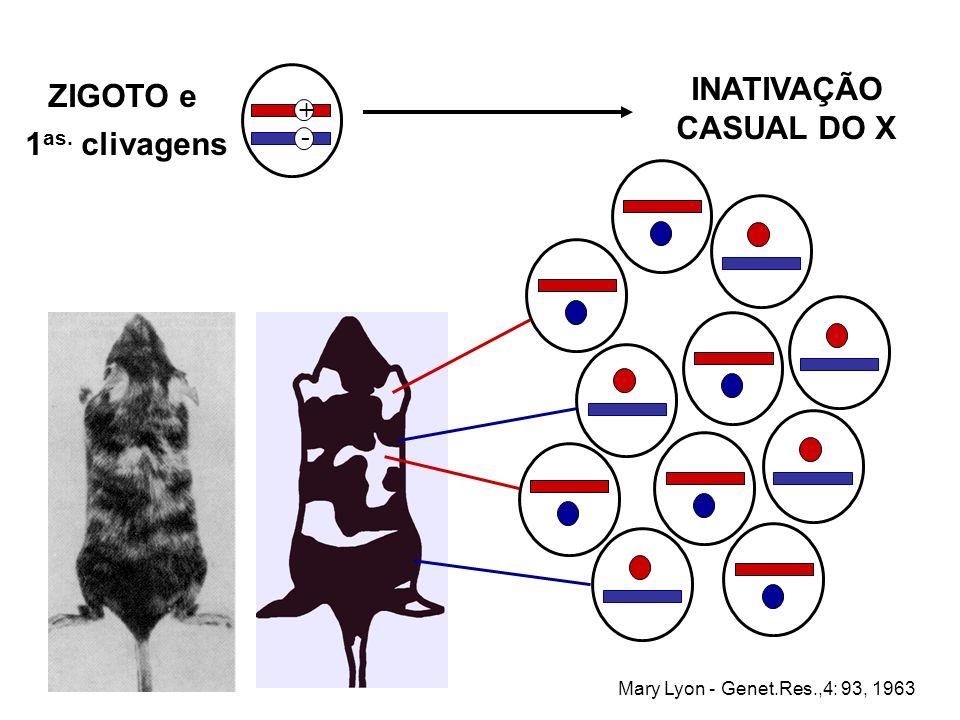 INATIVAÇÃO CASUAL DO X ZIGOTO e 1as. clivagens