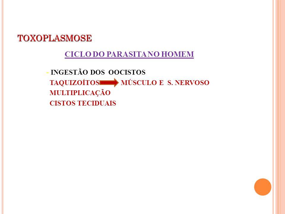 TOXOPLASMOSE CICLO DO PARASITA NO HOMEM - INGESTÃO DOS OOCISTOS