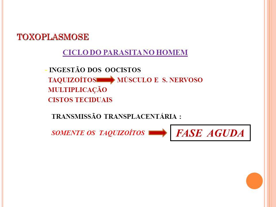 FASE AGUDA TOXOPLASMOSE CICLO DO PARASITA NO HOMEM