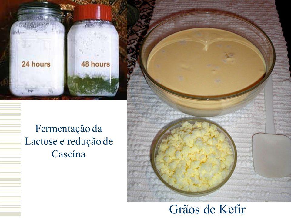 Fermentação da Lactose e redução de Caseína