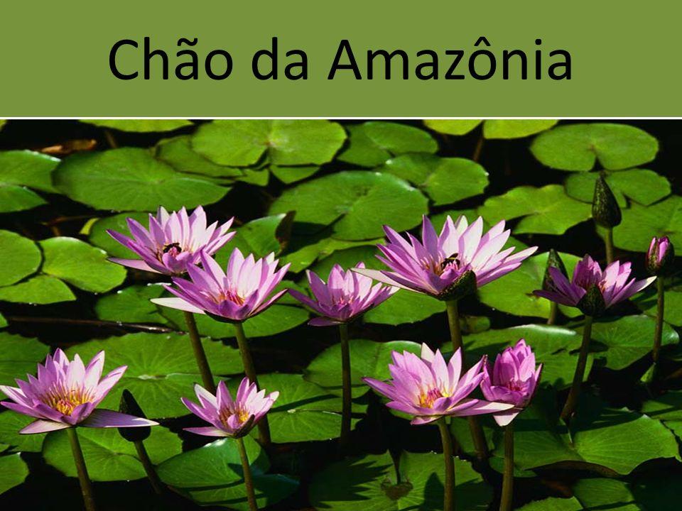 Chão da Amazônia