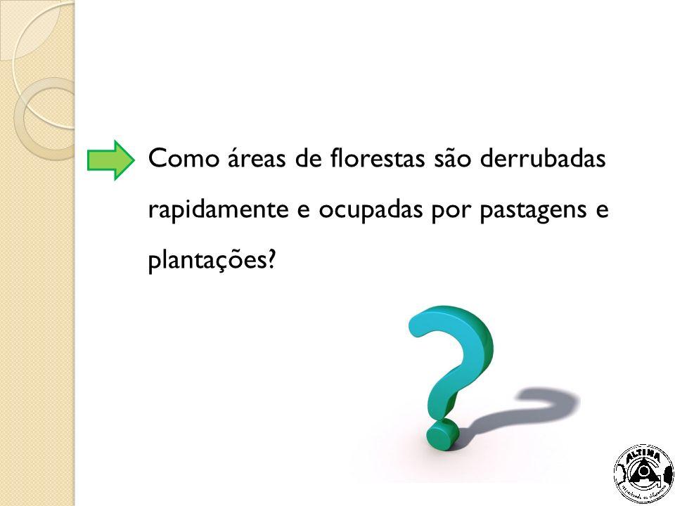 Como áreas de florestas são derrubadas rapidamente e ocupadas por pastagens e plantações