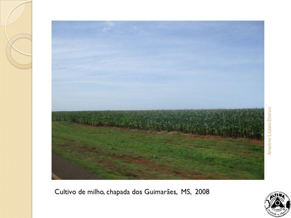 Cultivo de milho, chapada dos Guimarães, MS, 2008