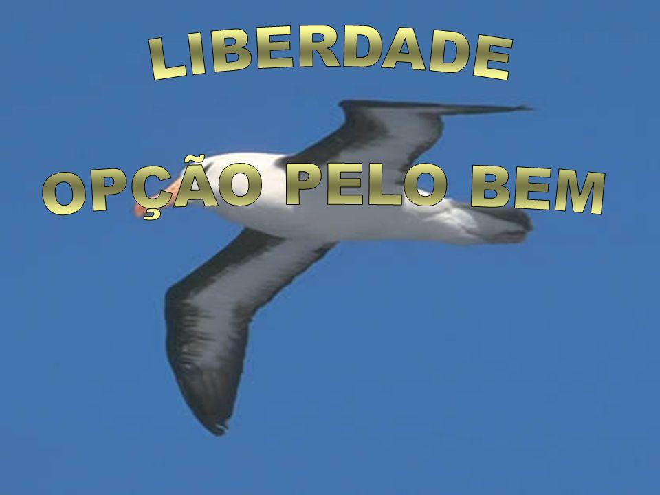 LIBERDADE OPÇÃO PELO BEM