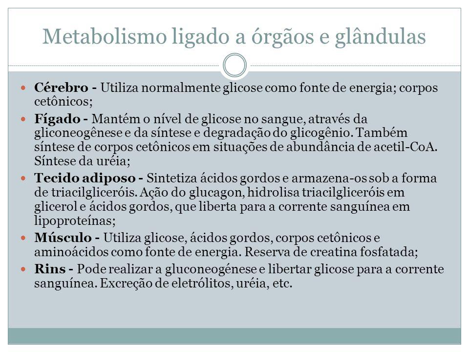 Metabolismo ligado a órgãos e glândulas