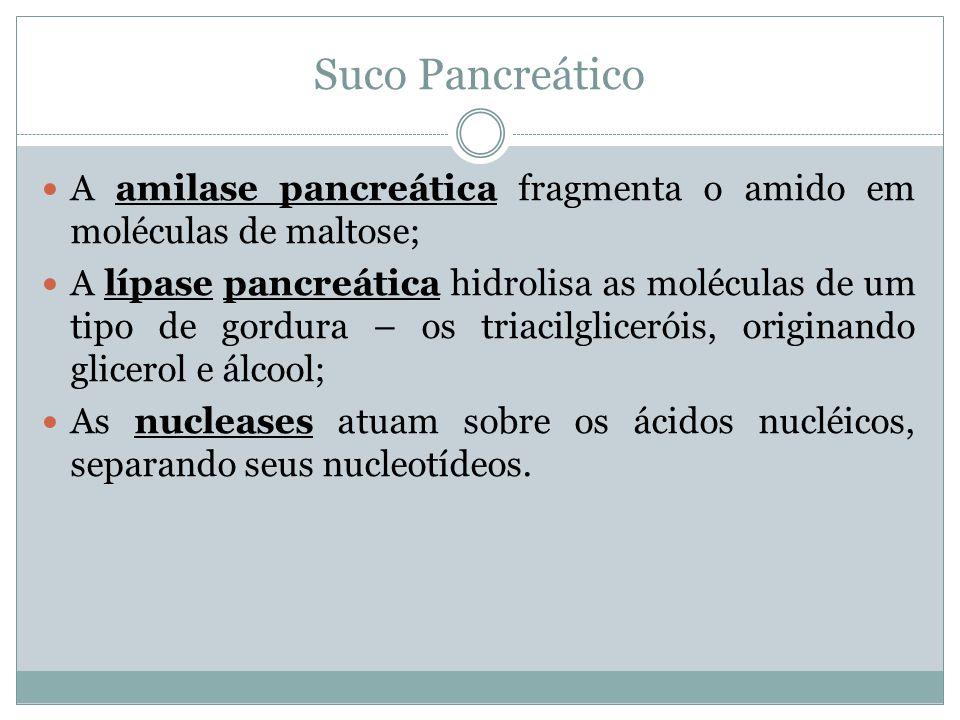 Suco Pancreático A amilase pancreática fragmenta o amido em moléculas de maltose;