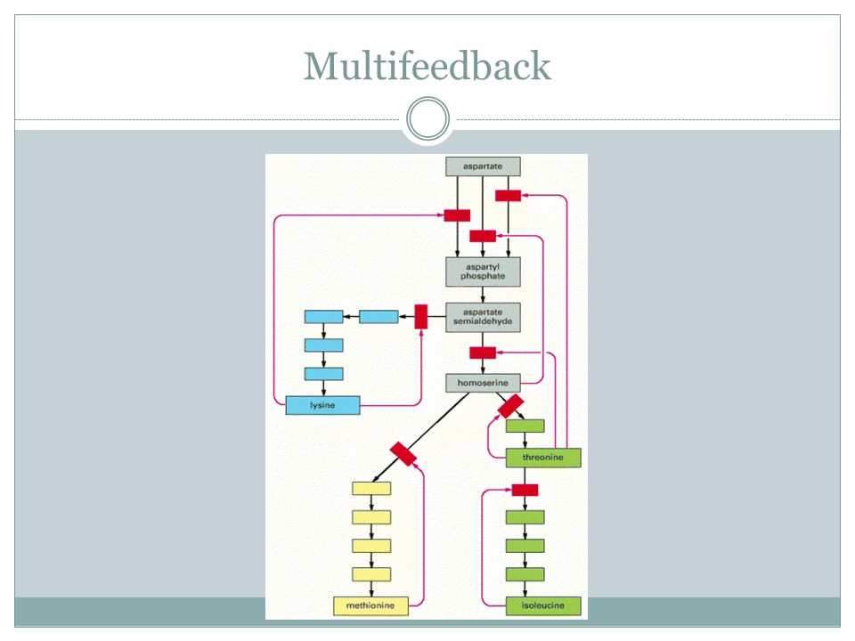 Multifeedback