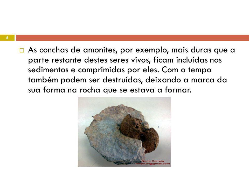 As conchas de amonites, por exemplo, mais duras que a parte restante destes seres vivos, ficam incluídas nos sedimentos e comprimidas por eles.