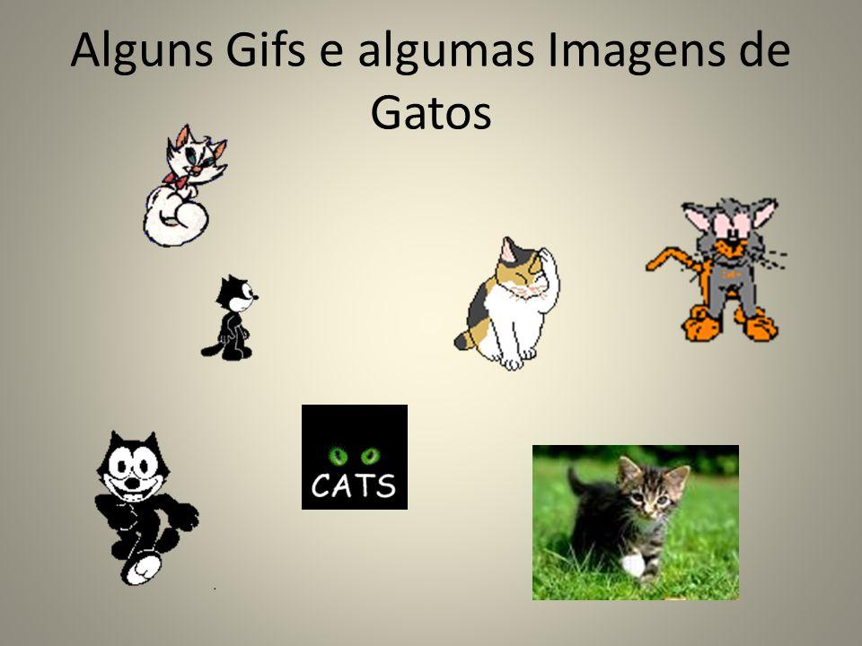 Alguns Gifs e algumas Imagens de Gatos