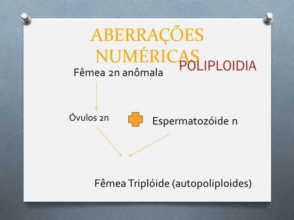 ABERRAÇÕES NUMÉRICAS POLIPLOIDIA Fêmea 2n anômala Espermatozóide n