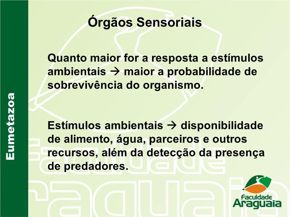 Órgãos Sensoriais Quanto maior for a resposta a estímulos ambientais  maior a probabilidade de sobrevivência do organismo.